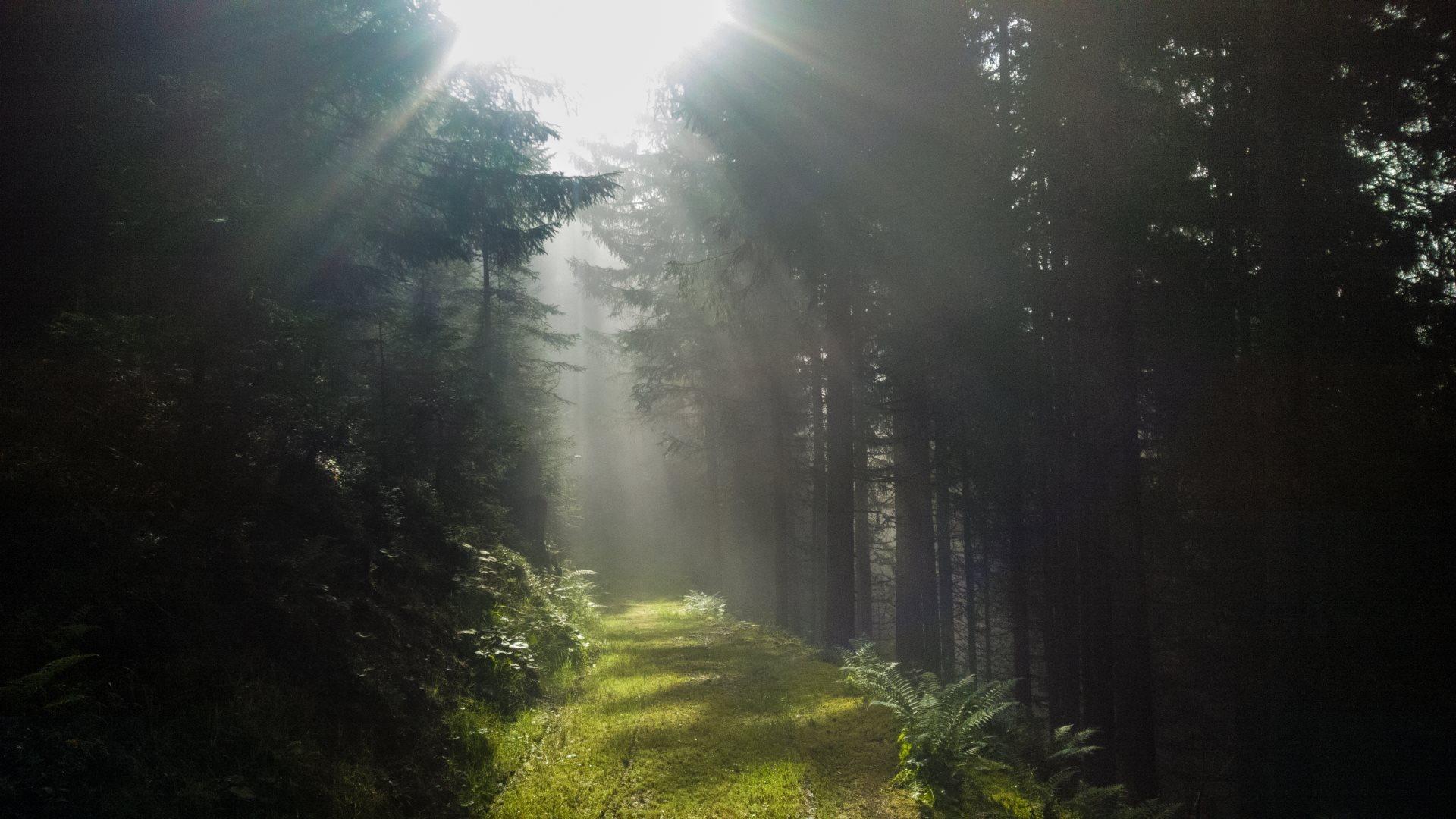 Light path through the dark forest_HD