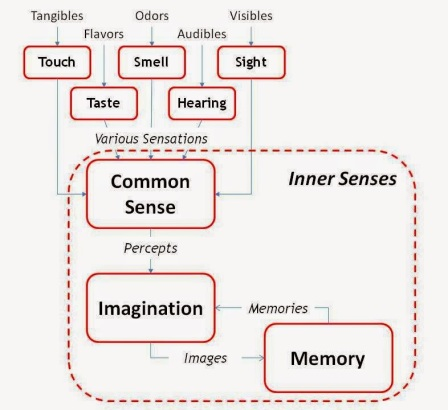Outer and Inner Senses